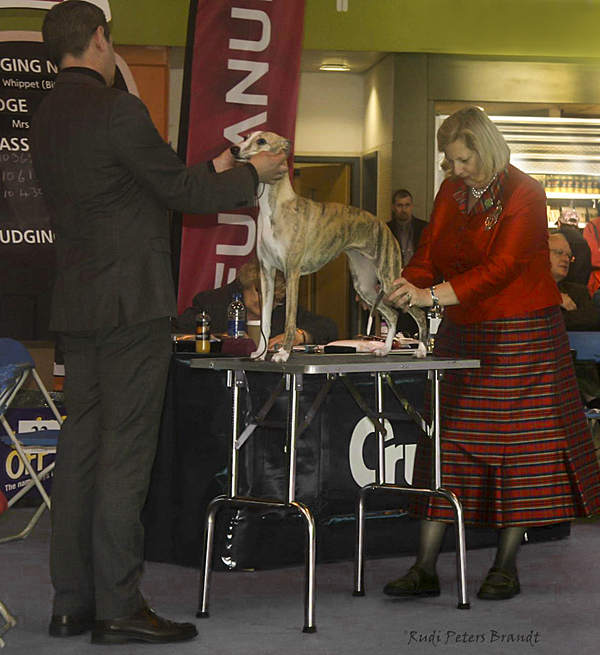 meis crufts 14 d 600
